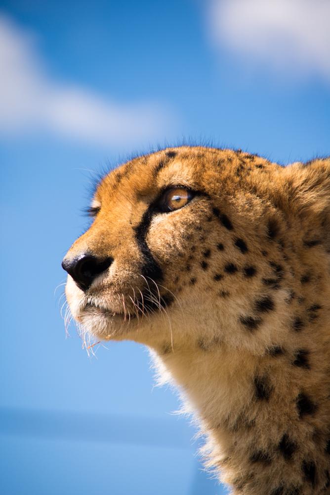 Cape Town & Johannesburg Safari